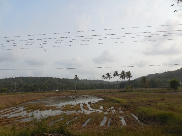 735sqmt plot Fieldview for Sale in Pomburpa, North-Goa.(1.17Cr)