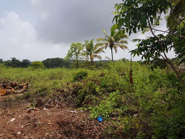 2325sqmt Plot for Sale in Nagoa-Arpora, North-Goa.(5.12Cr)