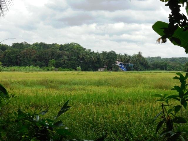2850sqmt plot with Fieldview for Sale Nachinola-Mapusa, North-Goa.(3.14Cr)